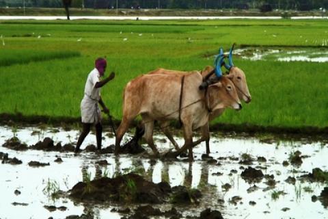 Pense Global, Aja Rural